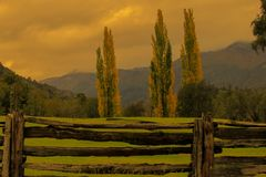 You see a rustic fence and in the background three poplars and mountains stock photos