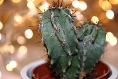 A small cactus with lights Royalty Free Stock Photos
