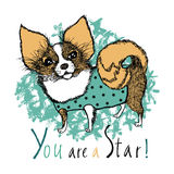 You are a star! Design card with dog. You are a star! Design card with a dog of breed Chihuahua Royalty Free Stock Photos