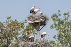 You storks in their nests Stock Photo