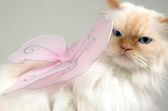 And you thought your job was bad. Cat unhappy to be a fairy. Lexus the cat Stock Photo
