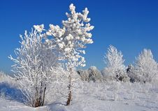 With you, although to the edge of the light!. Pair tree winter snow nature Stock Photography