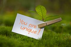 You are unique!. The words You are unique! in a Ginkgo Tree Royalty Free Stock Images