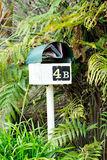You've got mail. Mailbox mailbox letter box letterbox surrounded by green ferns with mail  junk mail. Green and cream mailbox mail box letterbox letter box with Royalty Free Stock Photo