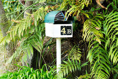 You've got mail. Mailbox mailbox letter box letterbox surrounded by green ferns with mail  junk mail. Green and cream mailbox mail box letterbox letter box with Stock Photo
