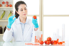 You will find the clue in this genetic modification tomato Stock Photos