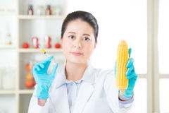 You will find the clue in this gmo corn Royalty Free Stock Photos