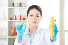 You will find the clue in this gmo corn Royalty Free Stock Photography