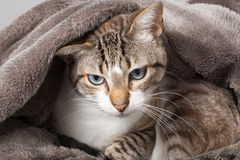 You woke me up. Cat staring with surprise and strange look Stock Images
