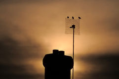 Youghal Sunset. Three crows sit on tv. mast at sunset in Youghal, Co.Cork, Ireland Stock Photo