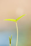 Yougn green leaf with shallow depth of field Royalty Free Stock Photos