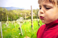 Youn boy blowing dandelion in the middle of nature stock photo