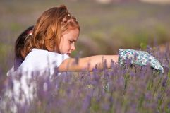 Young girls with lavender flowers. Young girls picking lavender flowers with gloves Royalty Free Stock Photography