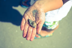 Yound boy holding a shell Royalty Free Stock Photography