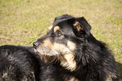 Yound crossbreed Dog Stock Photography
