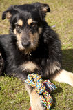 Yound crossbreed Dog Royalty Free Stock Photography