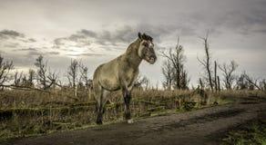A yound horse walking around in winter wasteland. stock photo