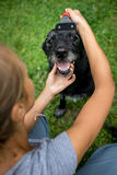 Younf woman combing out the fur of a black dog Stock Photo