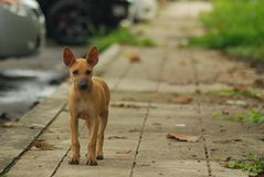 Young abandon stray dog standing lonely on the footpath stock photography