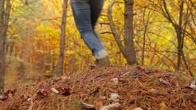 Young Active female with backpack have a walk in autumn forest stock video