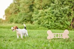 Adorable happy fox terrier dog at the park 2018 new year greetin Royalty Free Stock Images