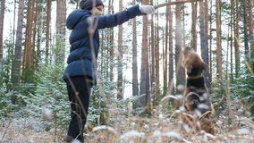 Young active woman trains in the forest dog breed Airedale Terrier. The first snow in the autumn forest lies on the dry grass stock footage