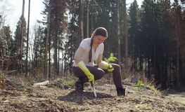 Young activist plants a small fir-tree. On the forest felling. Save nature concept stock photography