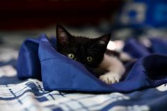 Young Adorable Kitten Stock Image