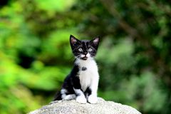 Young Adorable Kitten Royalty Free Stock Photos