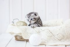 Young adorable kitten sitting in a basket. Young adorable kitten sitting in a basket Stock Image