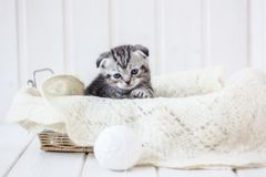 Young adorable kitten sitting in a basket. Young adorable kitten sitting in a basket Stock Images