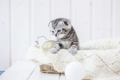 Young adorable kitten sitting in a basket. Young adorable kitten sitting in a basket Royalty Free Stock Images
