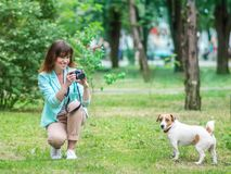 Young adult happy smiling woman photographer taking a photo of small dog jack russel terrier outside in green summer Royalty Free Stock Photography