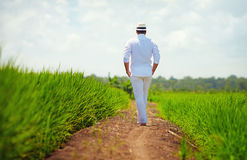 Young adult man walking away on path through the rice field Stock Images