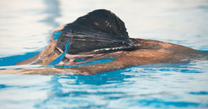 Young adult swimmer Stock Photos