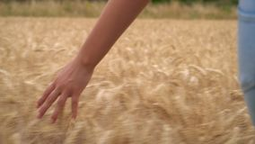 Young adult woman or teenage female girls hand feeling the top of a field of golden barley, corn or wheat crop. Slow motion video clip of young adult woman or stock video footage