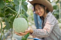 Young agricultural researchers smile face. This farm is organic farming. Melon here is delicious. Especially Honey Dew Melon is very popular royalty free stock images