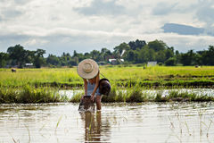 Young agriculturist catching fish Royalty Free Stock Photos