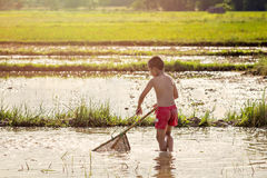 Young agriculturist finding for fish Royalty Free Stock Image