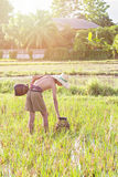 Young agriculturist fishing in swamp Stock Image