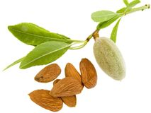 Young almond Royalty Free Stock Image