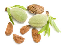 Young almonds Royalty Free Stock Photo