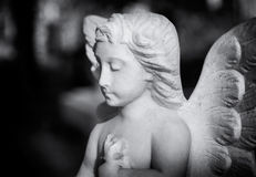 Young angel statue in a London cemetery looks down while praying Stock Image