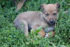 Young Animal portrait. Puppy in green grass. Young Animal portrait Stock Photography