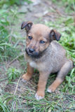 Young Animal portrait. Puppy in green grass. Young Animal portrait Royalty Free Stock Image