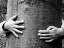 Young arms hugging a beech in autumn royalty free stock photography