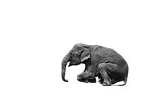 Young asia elephant sitting on white background. Young asia elephant sitting show isolated on white background stock images
