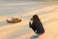Young asia woman takes pictures of dog. royalty free stock photos
