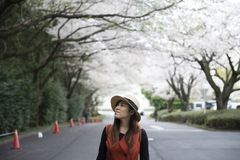 Young Asian beautiful woman is enjoy traveling in Japan royalty free stock image