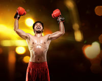 Young asian boxer man with boxing gloves celebrating a win Royalty Free Stock Images